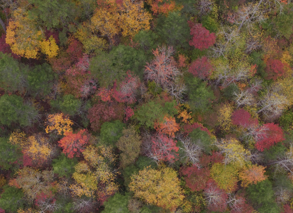 Forest aerial photo.