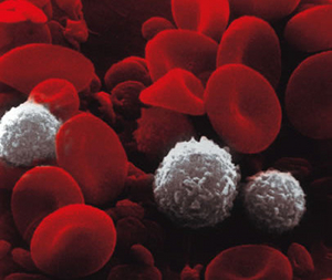 Blood cell photo.