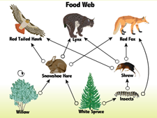 food web tropical rainforest food web african savanna animals food web ...