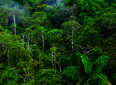 Rainforest photo.
