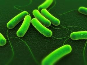 Andersen-microbes-Web