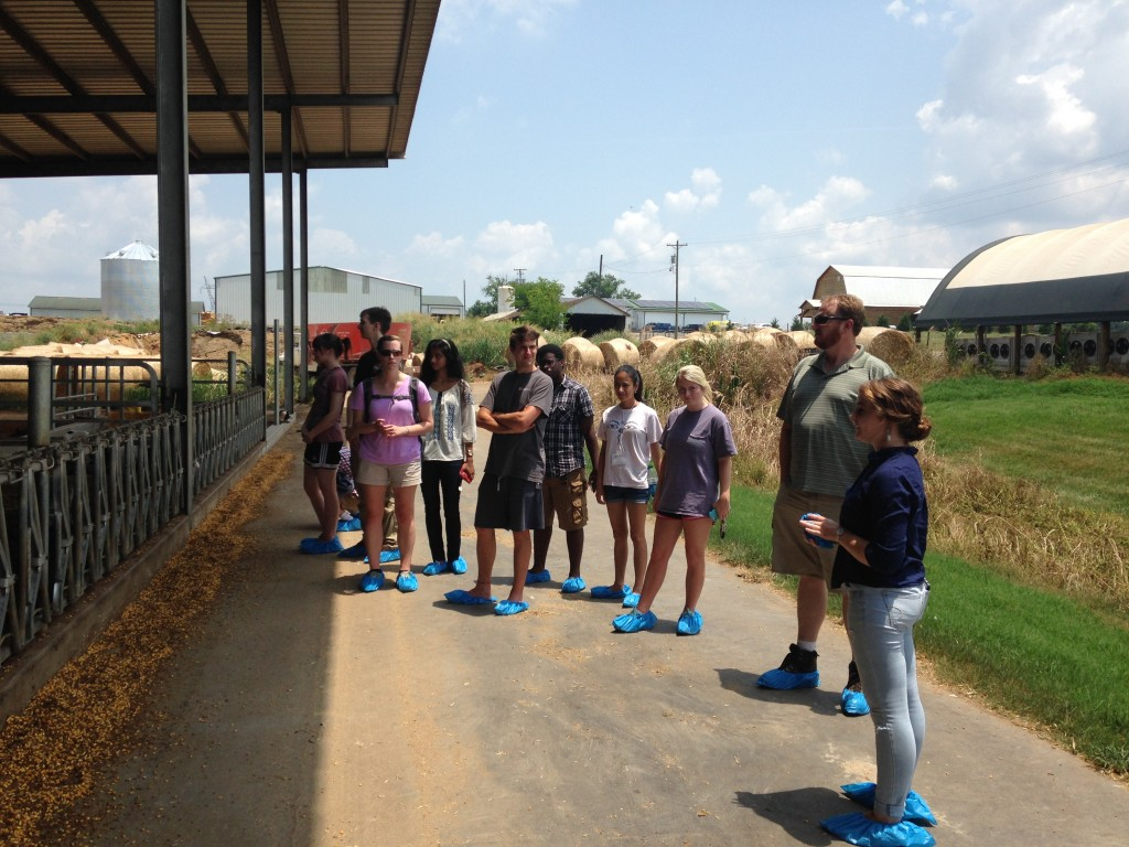 The host-pathogen and tuberculosis SRE groups tour a local dairy farm to learn about how cattle are managed to prevent the spread of infectious diseases.